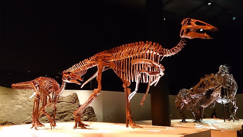 File:Paleo Hall at HMNS Edmontosaurus.jpg