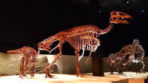 File:Paleo Hall at HMNS Edmontosaurus.jpg