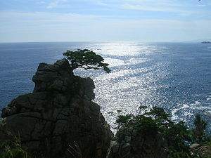 English: A Korean pine tree on a rocky cliff i...