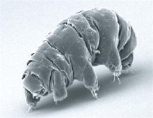 tardigrades ,factgasm