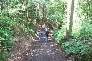 woods, hiking