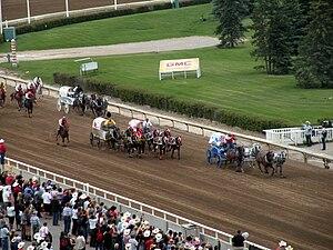 Chuckwagon racing at the 2009 Calgary Stampede.