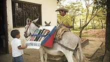 boy & book burro