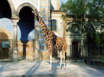 Berlin Zoological Garden - Wikidata