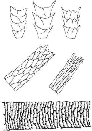 Code of Civil Procedure, 1908 – O.13 r.10