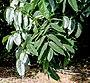 Leaves I IMG 8668.jpg