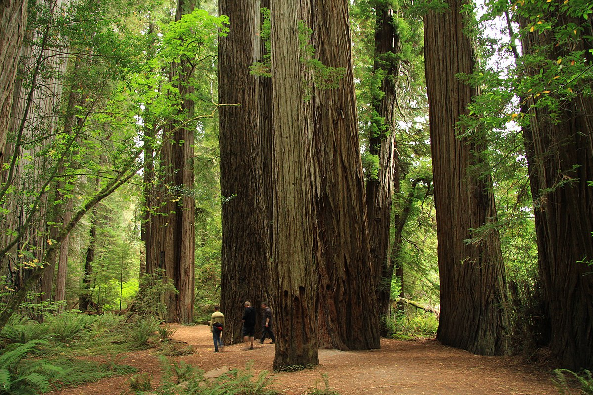 Jedediah Smith Redwoods State Park  Wikipedia