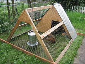 An A-frame chicken coop in a Portland, Oregon ...