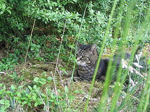 A cat in a garden / Katze im Grünen