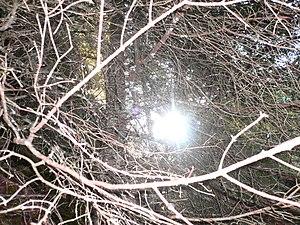 Un raggio di luce penetra attraverso il grovig...