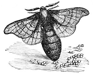 Popular Science MonthlyVolume 3October 1873Silk Worms