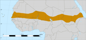 The Sahel forms a belt up to 1,000 km wide, sp...