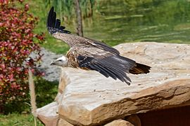 ZooParc de Beauval  Wikipdia