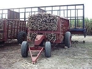 Zuckerrohr nach Ernte in der Nähe der Hauptsta...