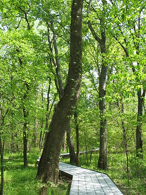 Boardwalk through Big Oak Tree State Park, Mis...