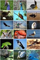 Bird Diversity 2011.png