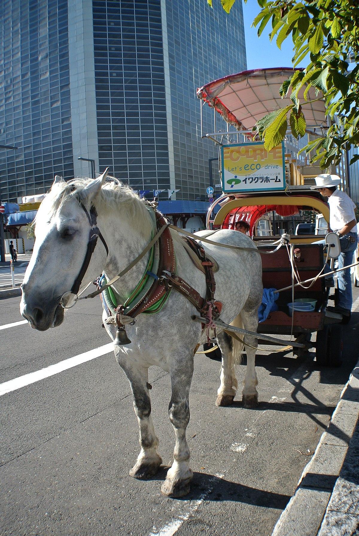 札幌観光幌馬車 Wikipedia