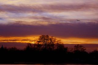 Flickr - law keven - Winter Sunset in London...