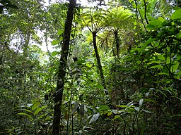 Ejemplo de selva, jungla o bosque lluvioso tropical