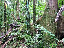 diagram of a tropical forest cone cells the eye rainforest wikipedia other types edit