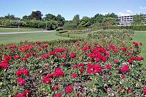 Aarhus rose garden