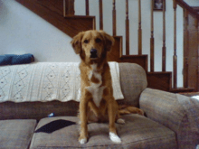 """A dog displaying mastery of the command """"sit"""""""