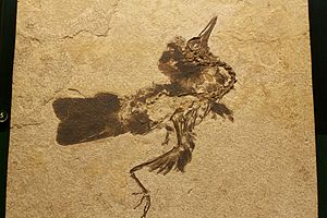 Unidentified bird species from the Fossil Butt...