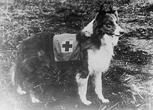 Red Cross dog - Italy. Photo cropped from orig...
