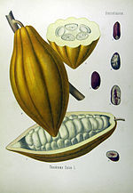 D Où Vient Le Chocolat : vient, chocolat, Cacao, Wikipédia