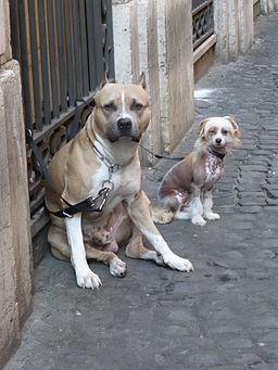 V d Pozzetto - la padrona fa la spesa e noi qui P1090319 large dogs vs small dogs