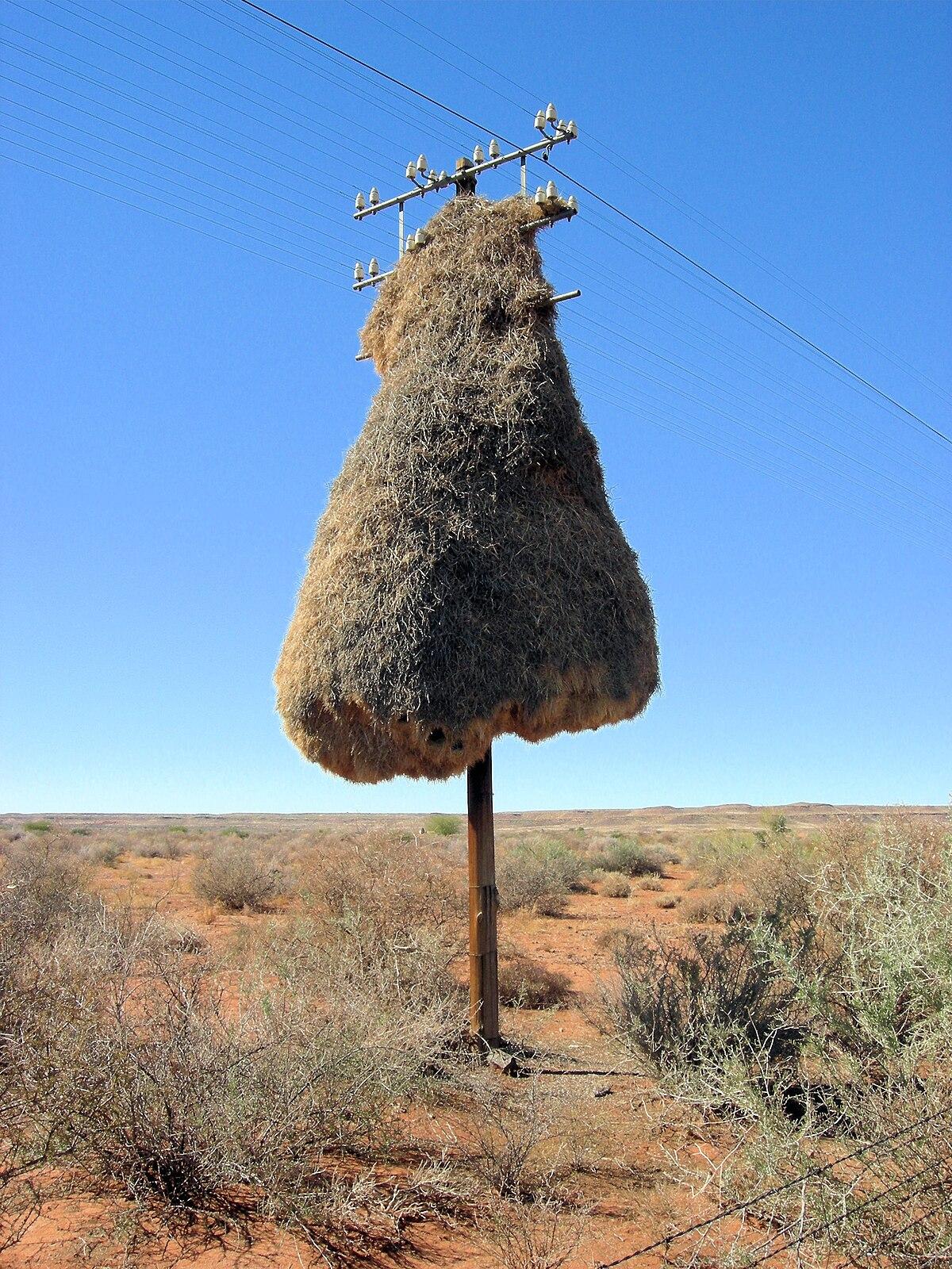 Kgalagadi Transfrontier Park Travel Guide At Wikivoyage