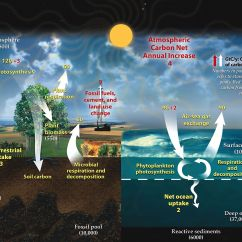 Basic Carbon Cycle Diagram Obd2 Wiring Wikipedia