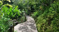 Hawaii Tropical Botanical Garden - Wikipedia