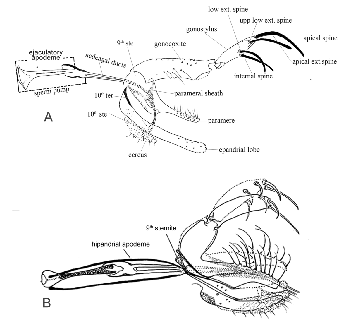 File:Parasite170028-fig21 Illustrated guide of