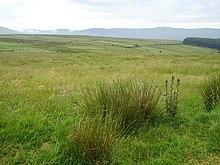 Flora Of Ireland Wikipedia