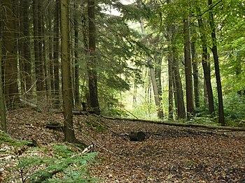 English: Walking trail Lonnekerberg Nederlands...