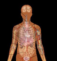 file man shadow anatomy png [ 1152 x 1024 Pixel ]