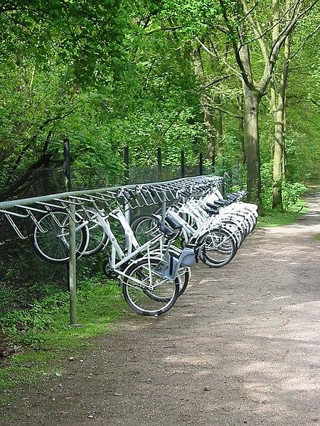 File:Witte fietsen de hoge veluwe.jpg