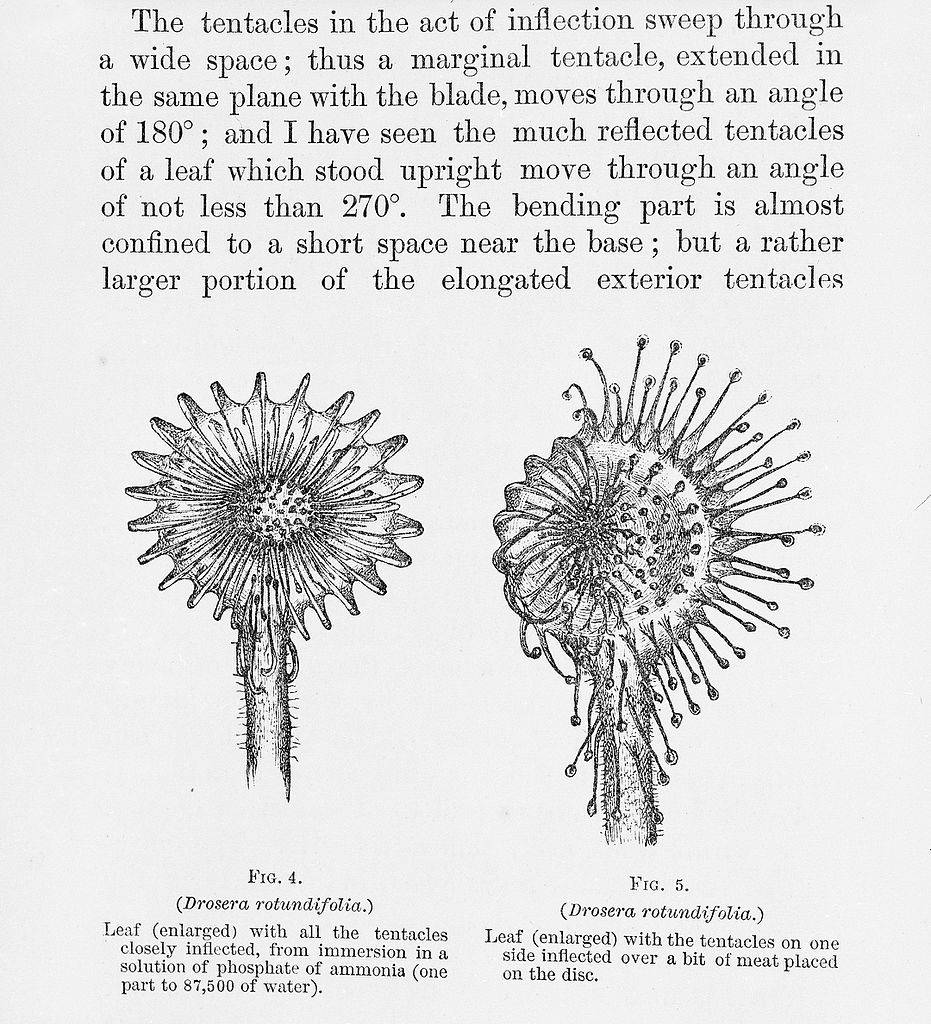File:C. Darwin, Insectivorous Plants Wellcome L0031429.jpg