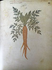 carrot plant diagram 2008 ford f250 headlight wiring wikipedia a depiction labeled garden from the juliana anicia codex 6th century ad constantinopolitan copy of dioscorides 1st greek pharmacopoeia