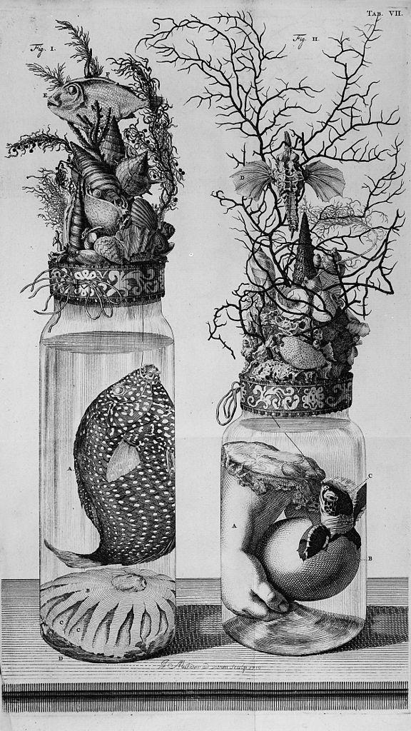 FileF Ruysch Thesaurus botanical preparations