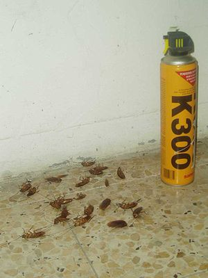 disinfested cockroaches