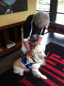 wheelchair harness living room chair cover mobility assistance dog - wikipedia
