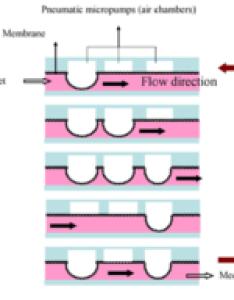 Microfluidic pumps edit also peristaltic pump wikipedia rh enpedia