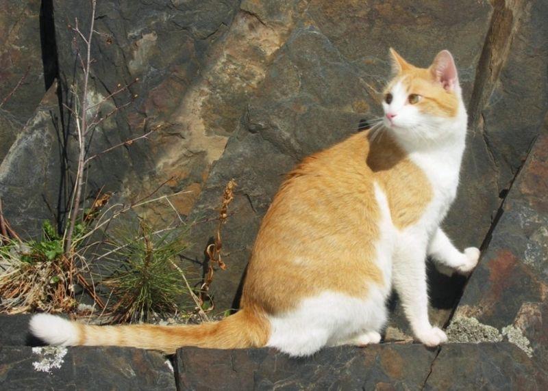 Fichier:Black hills cat-tochichi.jpg