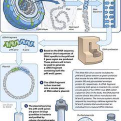 Diagram Of How Vaccines Work Mk4 Jetta Headlight Switch Wiring Dna Vaccination Wikipedia