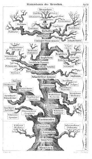 Charles Darwin Wikipedia La Enciclopedia Libre