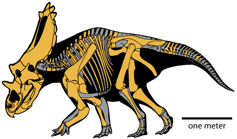File:Utahceratops gettyi.png
