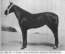 Charentais Cheval Wikipdia