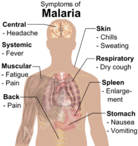 Hasil gambar untuk Malaria
